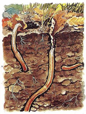 Daggmaskar i jorden