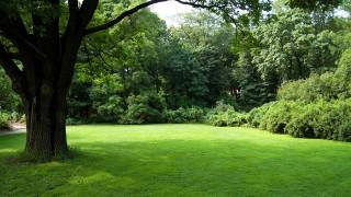 Filten i gräsmattan