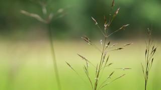 Gräsfrö – Värt att veta om gräsfröet