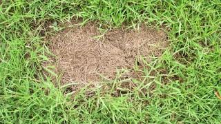Lappa och laga en gräsmatta