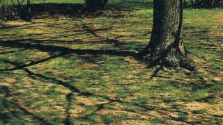 Orsaker till skador i en gräsmatta