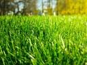 Före klippning av gräsmatta