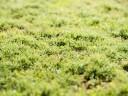 Mossa i gräsmattan – Vad beror det på?