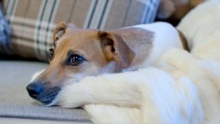 Tips för dig som har husdjur