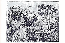 illustration-1-2
