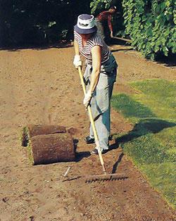 Omedelbart före utläggningen av färdig gräsmatta krattas jordbädden.