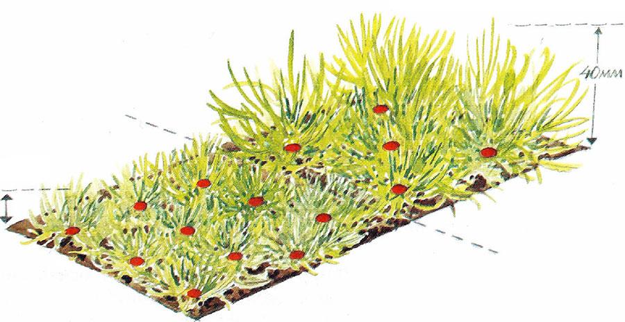 Olika klipphöjd på gräsmatta