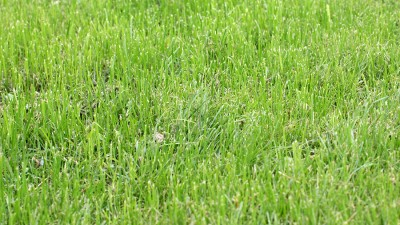 Den första skötseln av gräsmattan