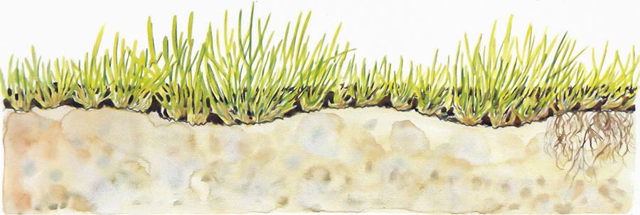 Dressa gräsmattan sand