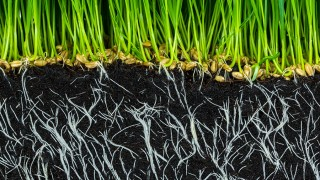 Växtnäringen i jorden
