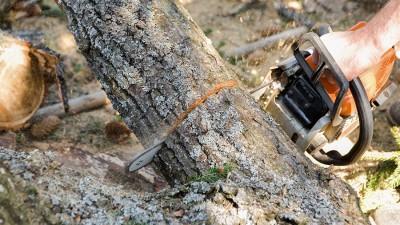 Låt motorsågen göra jobbet –  bra tips när du ska köpa motorsåg