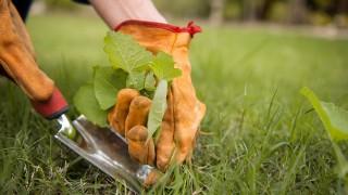 Trädgårdsredskap för ogräsbekämpning