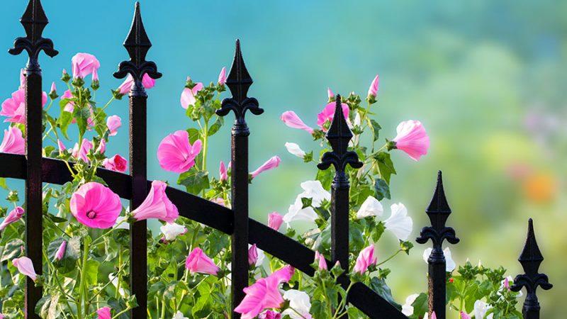 Smidesstaket – Tips och värt att veta