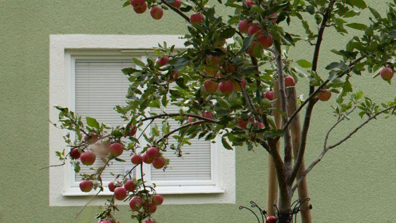 Rustikt och genuint med träfönster