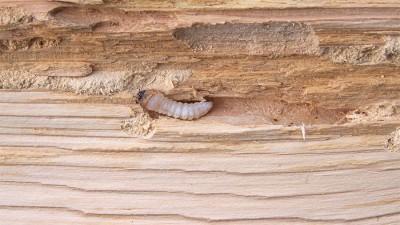 Skadedjur och insekter som äter på huset
