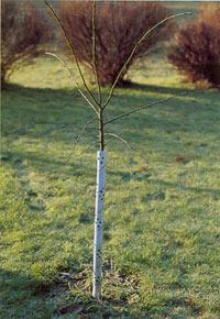 Plastspiral runt trädstam