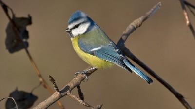 Fåglar i trädgården