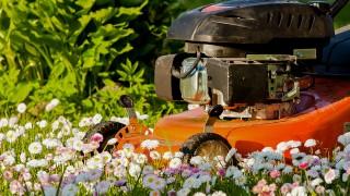 Sköt om din gräsklippare