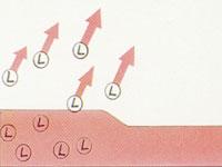 När latexfärg torkar avdunstar lösningsmedlet