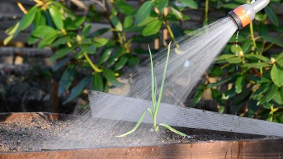 Dra ut vatten i trädgården