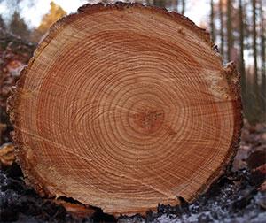 Svarvämnen trä