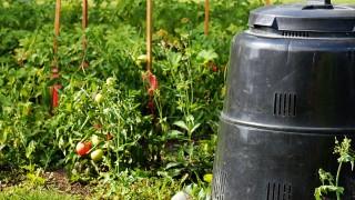 Kompost och kompostering