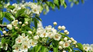 Planera trädgården inför våren