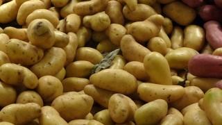 Förvara potatisen – bygg en potatisbinge