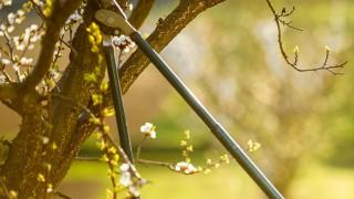 Beskärning av träd och buskar – Tips om redskap