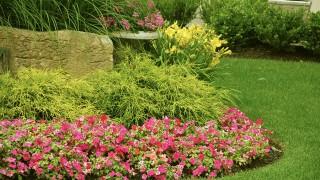 Planera trädgårdsrabatten – Tips och bra att veta