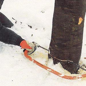 Fällning av mindre träd med bågsåg.