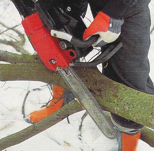 Kvistning av trädstam med motorsåg.
