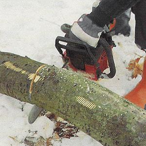 Steg 3. Kapar trädstammen från undersidan för att undvika att motorsågen kniper fast.