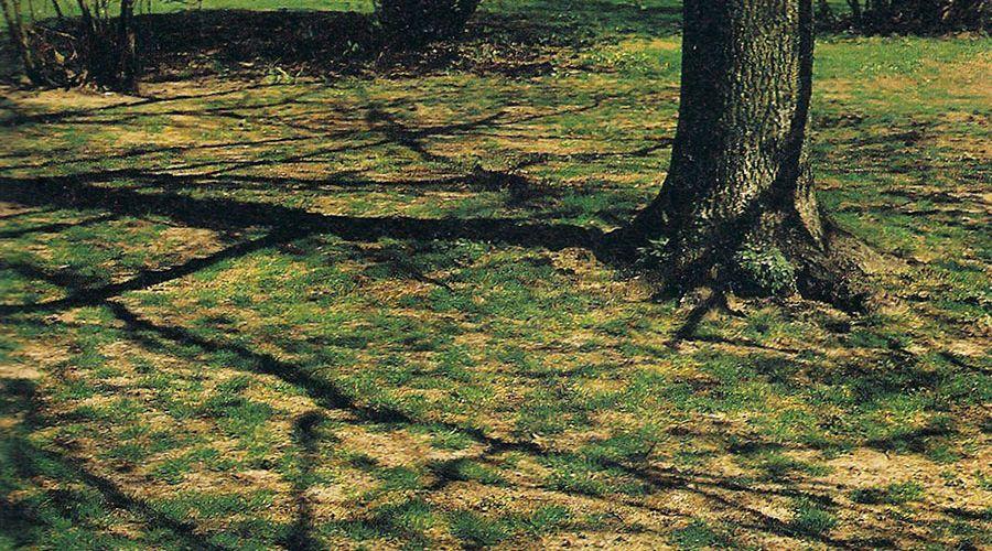 grasmatta-efter-svar-vinter.jpg