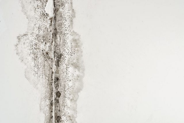 murrota-kallare-1.jpg
